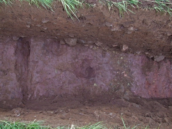 Results of Gifford Excavation (ditch, postholes, and stone platform